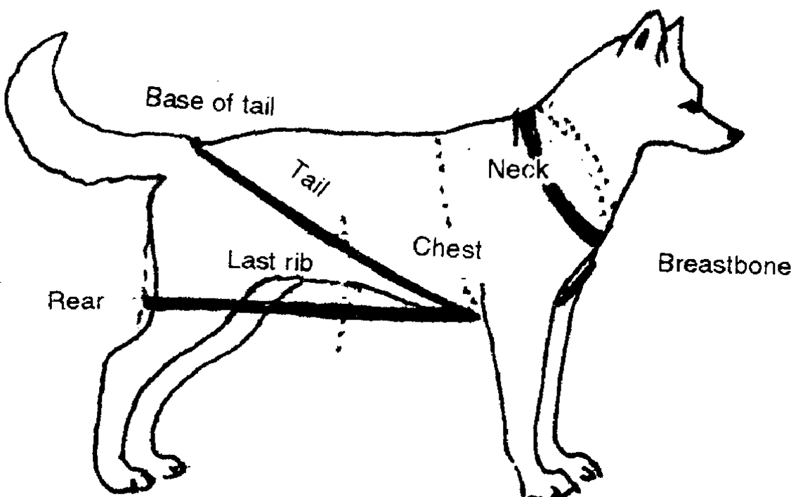 Measuring Dogs | Nordkyn Outers